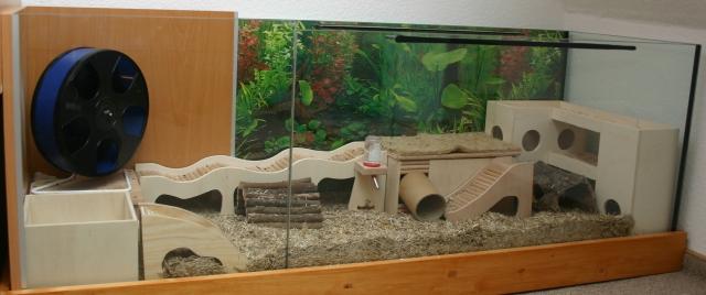 Обустройство аквариума для хомяка своими руками 100