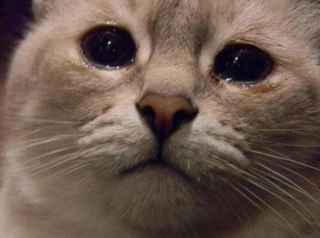 Слезы в глазах у кота