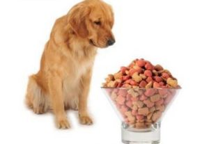 Собака ничего не ест
