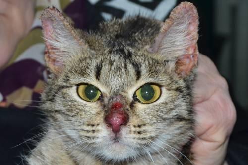 Аллергия на шампунь у котов