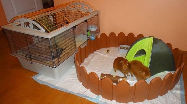 Сшить домик для морских свинок