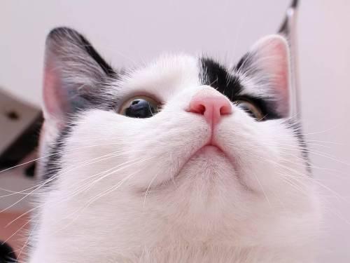 У кота кровь из носа причина