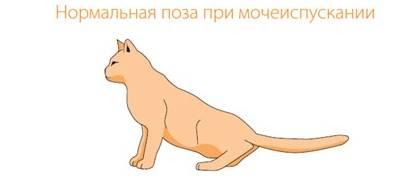 Как обезболить кота с мкб