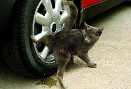 Соседский кот метит