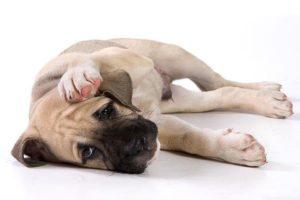 Сотрясение мозга у собаки причины признаки