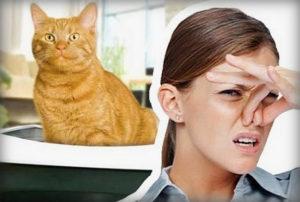 Как отучить кастрированного кота метить