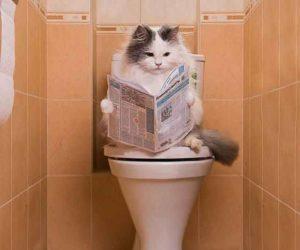 Быстро приучить к унитазу котенка