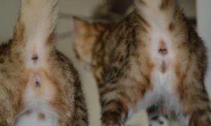 котенок кошка или кот