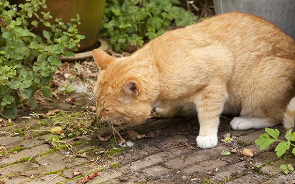 Почему кота рвет белой пеной