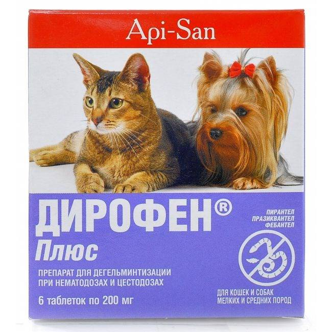 Симптомы, признаки и лечение глистов у котенка