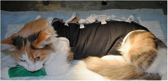 Кошка после стерилизации не ходит в туалет причины чем помочь питомцу