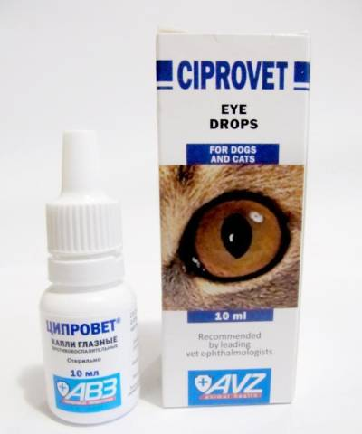 Чем лечить конъюнктивит у котенка — Все о проблемах с глазами