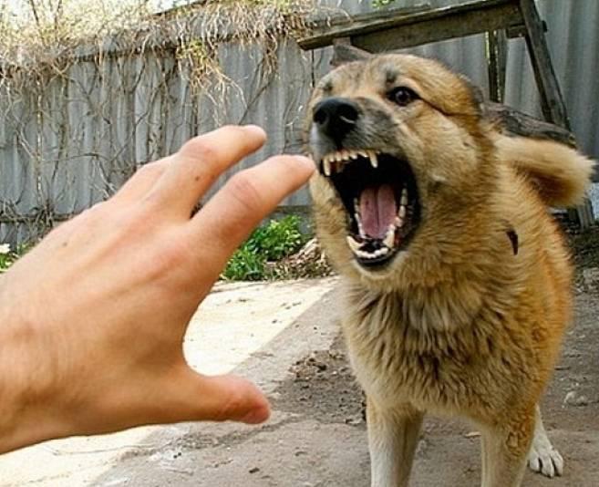 Анализ крови на бешенство у собаки Справка для домашнего надомного обучения Бирюлёво Западное