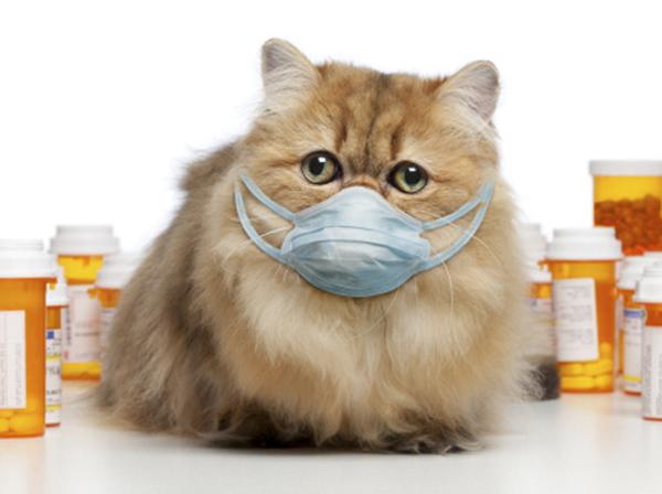 Кошка кашляет как будто подавилась причины. Почему кошка кашляет и хрипит: что делать