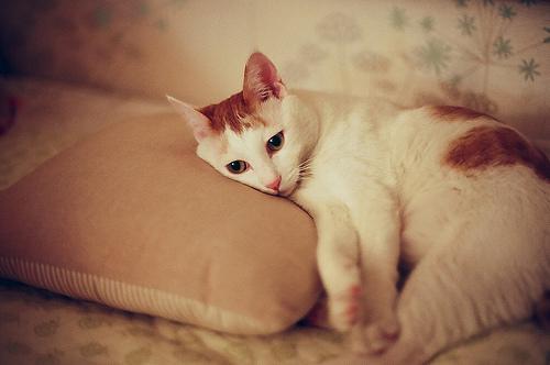 Болезнь почек у кошек – причины, симптомы и полезные травы