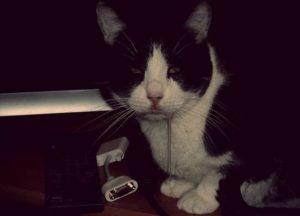 Язвенный стоматит у котов