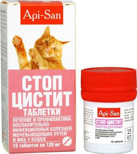 Как вылечить цистит у кота