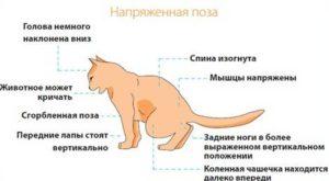Как можно вылечить кота от мкб thumbnail