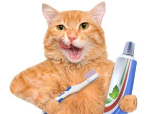 Почему у кошки неприятно пахнет изо рта: причины и лечение