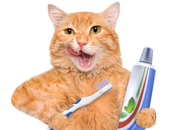 Почему у кота пахнет изо рта: как лечить, что делать, пахнет гнилью