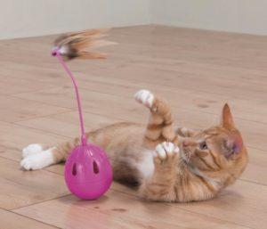 Как отучить кота кидаться и кусаться