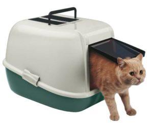 Как приучить взрослого кота к лотку в условиях квартиры