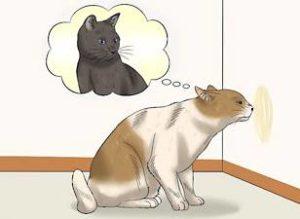 Кастрированный кот метит что делать