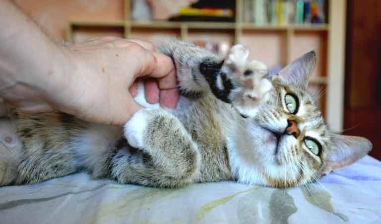 Как понять, что кошка беременна на ранних сроках и в домаших условиях