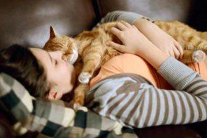 Беременная кошка много спит