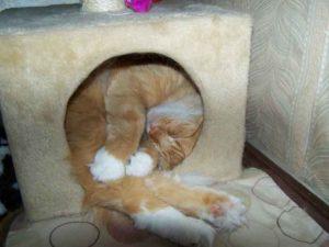 Сколько спят котята по месяцам