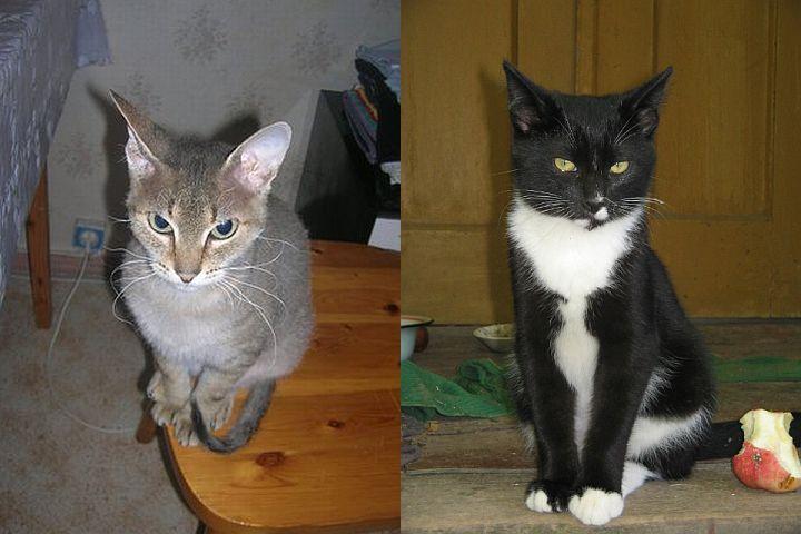 Как различить кота от кошки в маленьком возрасте