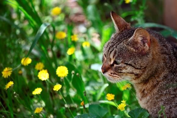 Как умирают кошки, почему уходят, как понять что умирает, что делать, признаки смерти