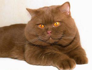 Как определить кота от кошки