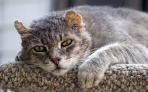 Сколько лет живет кошка по человеческим меркам