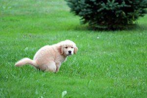 Белый кал у собаки: причины, диагностика возможных заболеваний. Собака какает