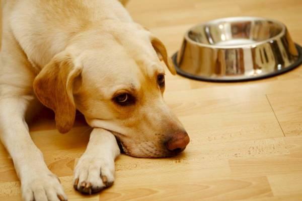 лечение гастрита у собаки
