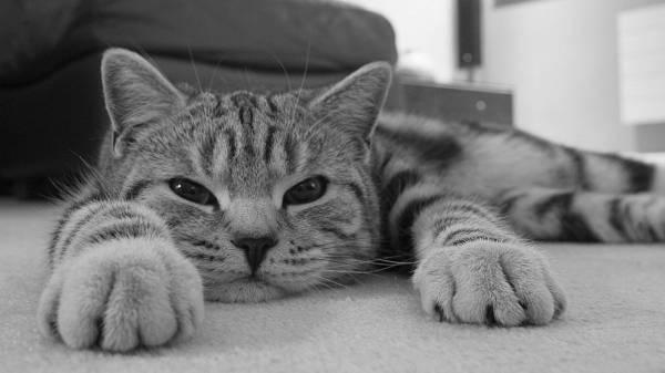 Гастрит у кошек: причины, симптомы и лечение